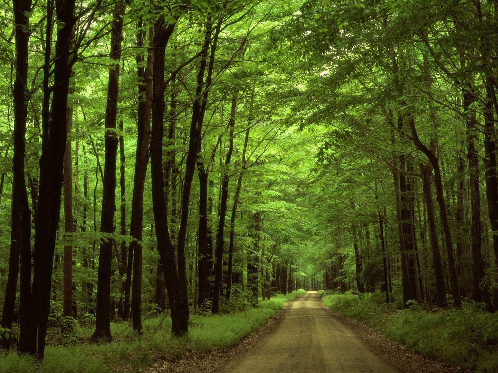 Ліс - заставки на робочий стіл