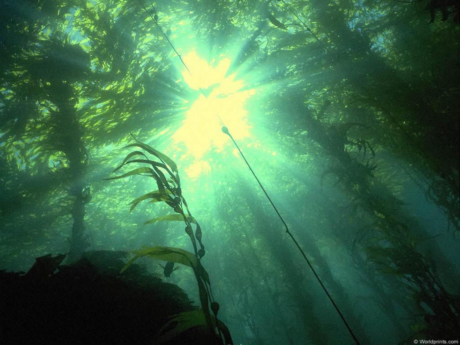 Природні джерела світла фото 19 фотография