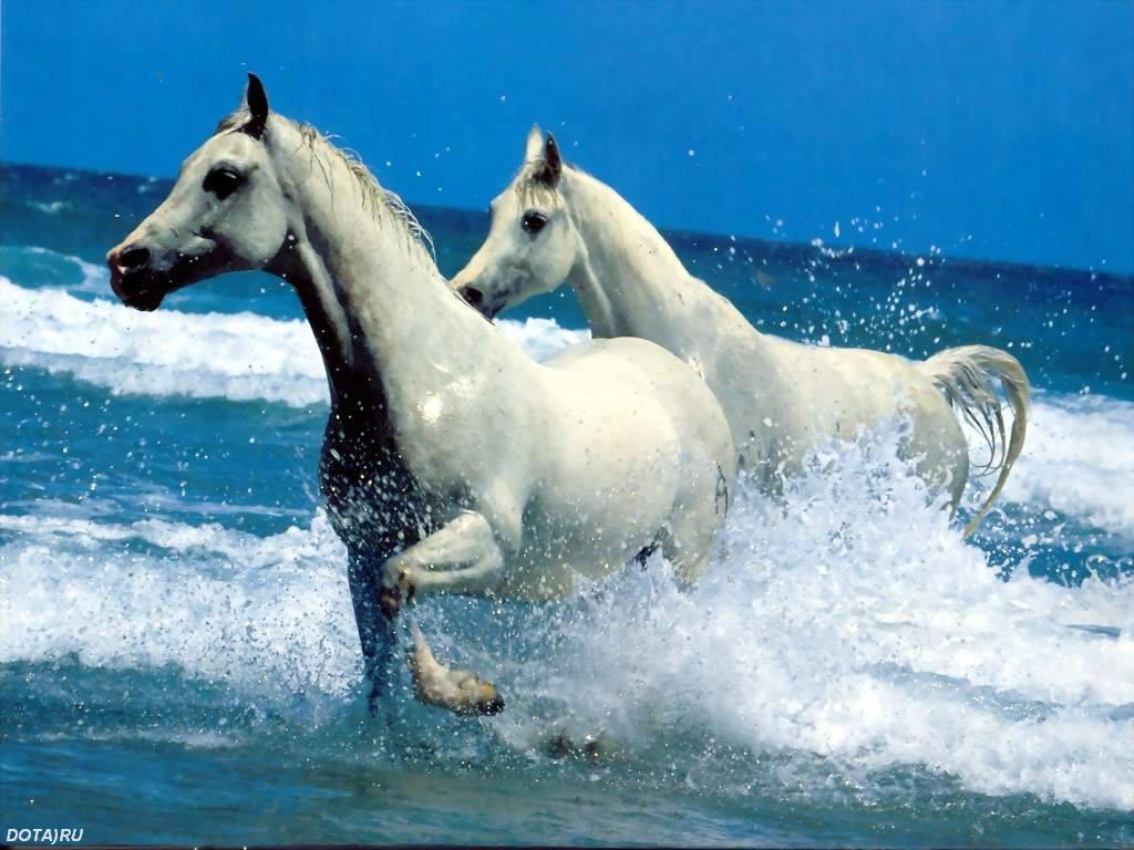 Лошади картинки на рабочий стол